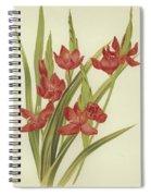 River Lily Or Crimson Flag Spiral Notebook