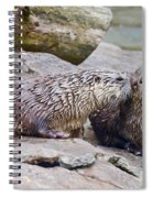 River Otters Spiral Notebook
