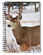 Rmnp Mule Deer 2 Spiral Notebook