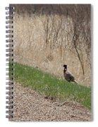 Roadside Rooster Pheasant Spiral Notebook