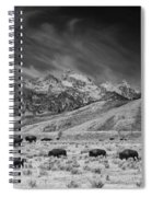 Roaming Bison In Black And White Spiral Notebook