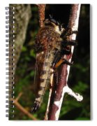 Robber Fly Spiral Notebook