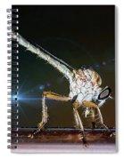 Robber Fly With It's Prey- Efferia Albibarbis Spiral Notebook