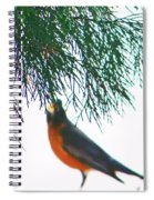 Robin 2 Spiral Notebook