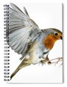 Robin Alighting Spiral Notebook