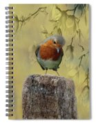 Robin Bird Spiral Notebook