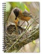 Robin Feeding Young Spiral Notebook