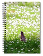 Robin In A Field Of Daisies Spiral Notebook