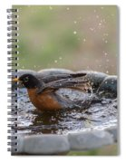 Robin In Bird Bath New Jersey  Spiral Notebook