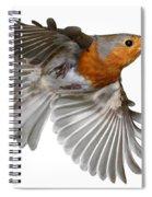 Robin In Flight Spiral Notebook