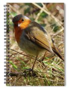 Robin In Hedgerow 3 Spiral Notebook