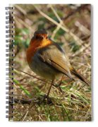 Robin In Hedgerow 2 Inch Donegal Spiral Notebook