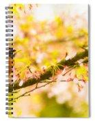 Robin In Spring Blossom Cherry Tree Spiral Notebook