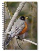 Robin In Tree 2 Spiral Notebook
