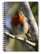 Robin On Branch Donegal Spiral Notebook