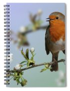 Robin On Cherry Blossom Spiral Notebook