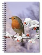Robin On Cotoneaster With Snow Spiral Notebook
