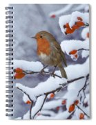 Robin On Snow-covered Rose Hips Spiral Notebook