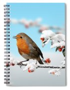 Robin On Snowy Cotoneaster Spiral Notebook