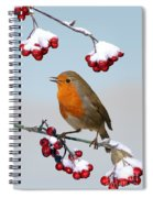 Robin On Winter Cotoneaster Spiral Notebook