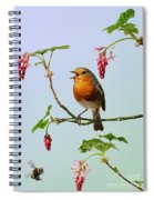 Robin Singing On Flowering Currant Spiral Notebook