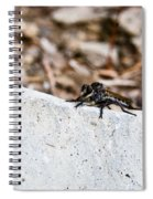 Rock And Robber Fly Spiral Notebook