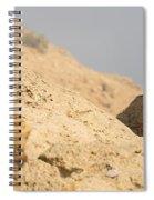 Rock Hyrax Procavia Capensis Spiral Notebook