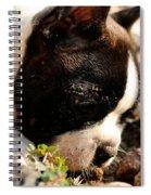 Rock Inspector Spiral Notebook