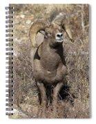 Rocky Mountain Big Horn Sheep Spiral Notebook