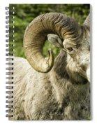 Rocky Mountain Bighorn Sheep Spiral Notebook