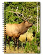 Rocky Mountain Elk Spiral Notebook