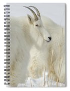 Rocky Mountain Goats In Wyoming Winter Spiral Notebook
