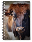 Rolly Polly Spiral Notebook