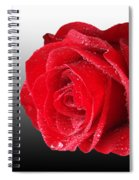 Romantic Rose Spiral Notebook