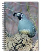 Rooster Quail  Spiral Notebook