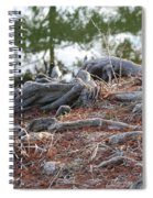 Rooted Lake Edge Spiral Notebook