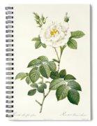 Rosa Alba Flore Pleno Spiral Notebook