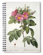Rosa Carolina Corymbosa Spiral Notebook