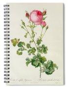 Rosa Centifolia Bipinnata Spiral Notebook