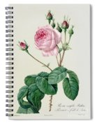 Rosa Centifolia Bullata Spiral Notebook