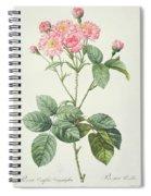 Rosa Centifolia Caryophyllea Spiral Notebook