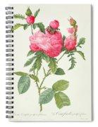 Rosa Centifolia Prolifera Foliacea Spiral Notebook