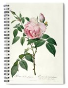 Rosa Chinensis And Rosa Gigantea Spiral Notebook
