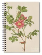 Rosa Cinnamomea The Cinnamon Rose Spiral Notebook