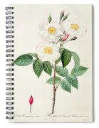Rosa Damascena Subalba Spiral Notebook