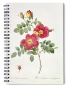 Rosa Eglantera Punicea Spiral Notebook
