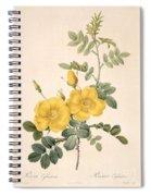 Rosa Eglanteria Spiral Notebook