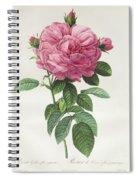 Rosa Gallica Flore Giganteo Spiral Notebook