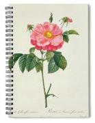 Rosa Gallica Flore Marmoreo Spiral Notebook