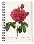 Rosa Gallica Spiral Notebook